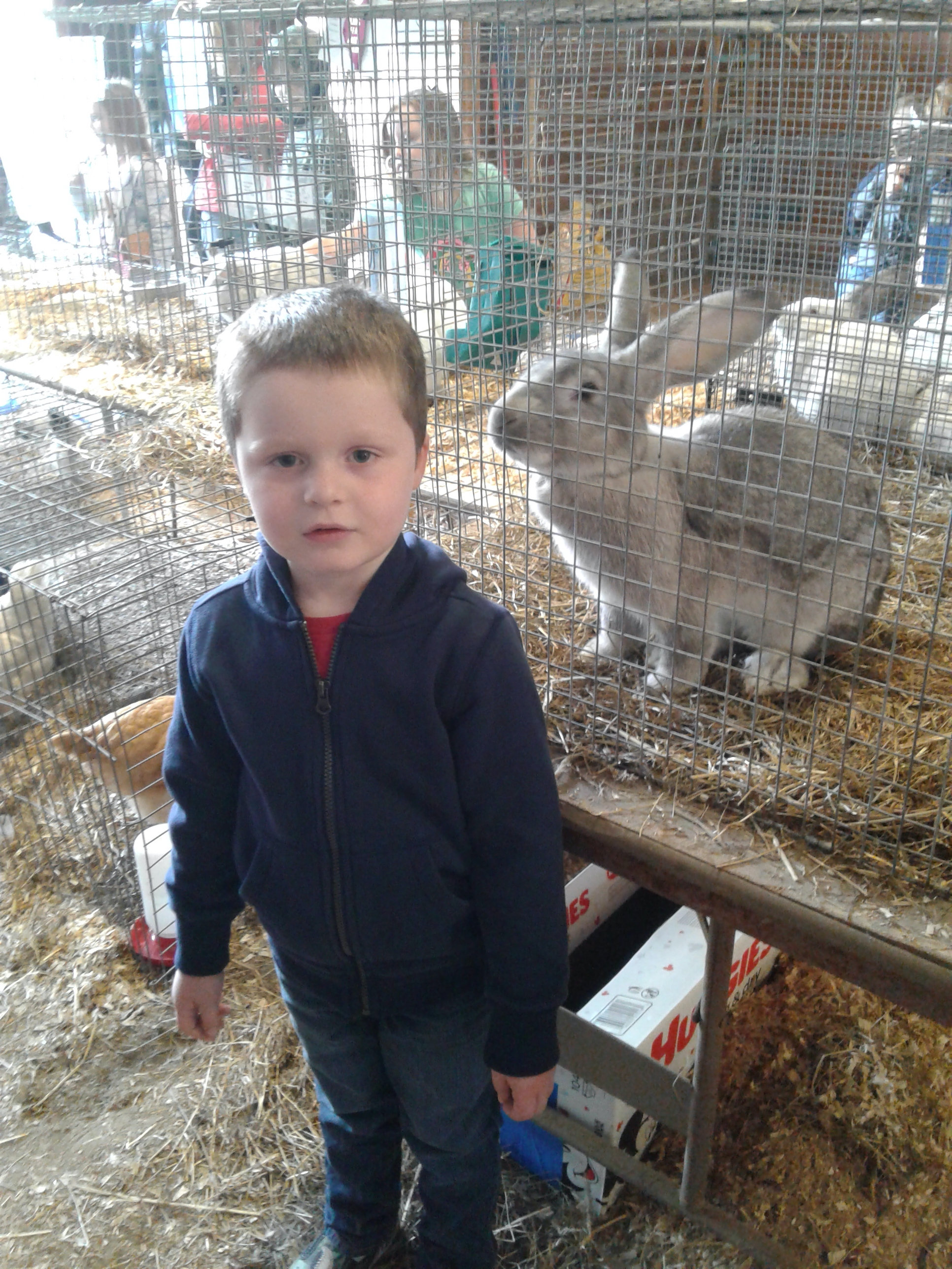 <strong>Visiting the small animals exhibit on display at the Pine Plains FFA Ag Fair, Shea Cordella, 4, posed in front of a very friendly Flemish giant.<em>Photo by Kaitlin Lyle</em></strong>