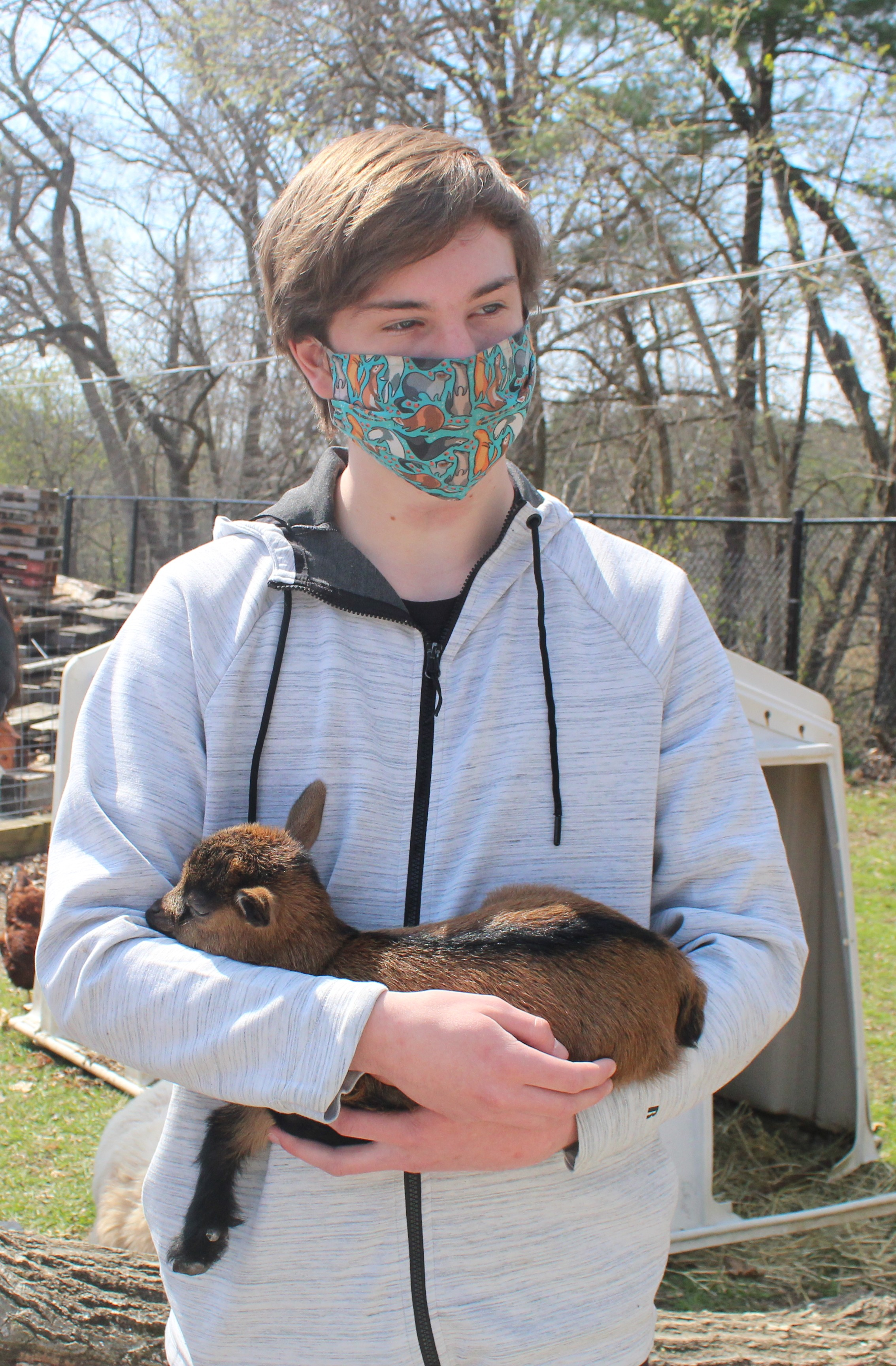 <strong>Phil Roberts, an 11th-grade student at Housatonic Valley Regional High School, held a Nigerian dwarf kid at the agricultural education barn on Tuesday, April 20.</strong><em><strong>Photoby Patrick L. Sullivan</strong></em>